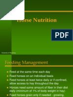 Equine Nutrition IRFAN