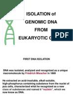 Isolation of Genomic DNA