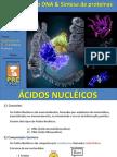 Aula Ácidos Nucleicos - Duplicação do DNA e Síntese Protéica