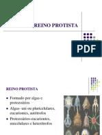 Reino Protista Prtozoarios