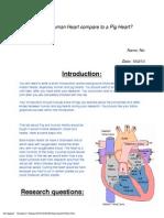 pig heart dissection final