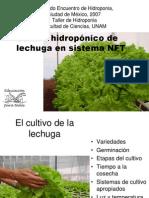 Lechuga en Sistema NFT
