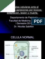 Adapatación, Lesión celular I Sem 2012