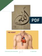 Cardiovascular system anatomy mcqs