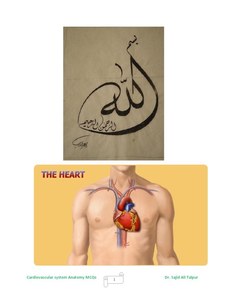 Cardiovascular system anatomy mcqs   Atrium (Heart)   Heart