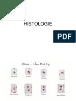 HISTOLOGIE sinteza