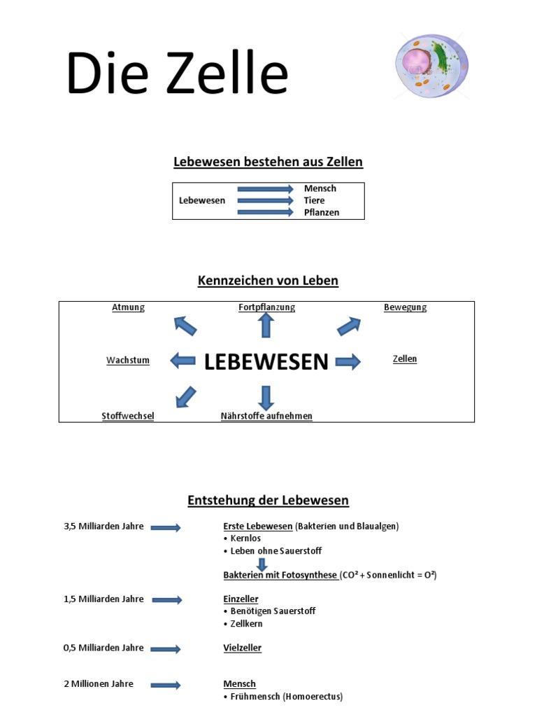 Modern Die Zelle Arbeitsblatt Inspiration - Kindergarten ...