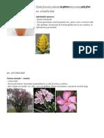 Plante Floricole Cultivate La Ghivece Decorative Prin Flori