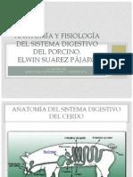 Anatomía y fisiología del sistema digestivo del porcino