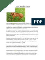 Perros de Raza Rodesiano