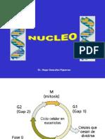 LEC 10 Nucleo