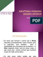 Seminário de anatomia-Perna