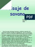 Peisajul de Savana- XIA