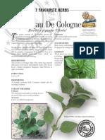 Mint Eau de Cologne-fragrant
