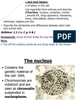 cell ultrastructure