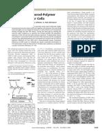 Hybrid Nanorod Polymer Solar Cell
