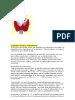 La glándula tiroides y la alimentación