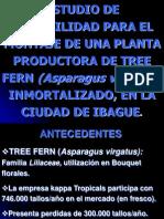 Conservación de Tree Fern.ppt