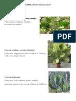 Specii Floricole Decorative Prin Frunze