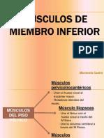 Mc3basculos de Miembro Inferior