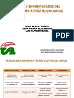 Plagas y Enfermedades Del Arroz