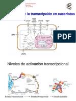 5 Transcripcion Eucariontes Clase II 2011