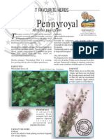 Mint Pennyroyal-Insect Repellant