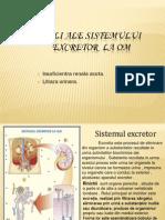 Boli Ale Sistemului Excretor