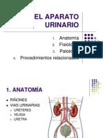 EL APARATO URINARIO.ppt