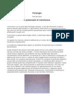 Lezione Di Fisiologia Del 5.10.10, Prof.ssa C.zona
