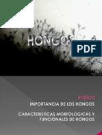 Fungi Libro 2011