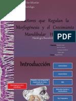 factores-que-regulan-la-morfogc3a9nesis-y-el-crecimiento.pptx
