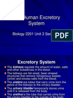 2201-The Human Excretory System
