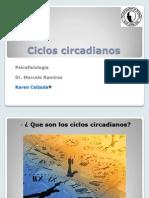 ciclos circadianos 1