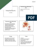 Fisiologi Sistem Reproduksi Pria 2010