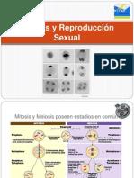 2.2 Meiosis y Reproduccion Sexual