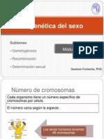 2.3 Gametogenesis Recombinacion y Genetica Del Sexo