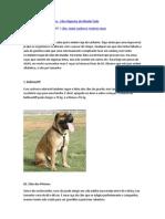 Maiores Raças de Cachorro.docx