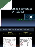Metabolismo energético en equinos para video