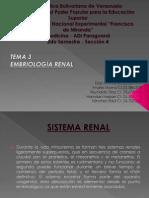 Tema 3 - Embriología de los Riñones