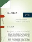 GUADUA (4).pptx