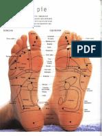 11 Mapas del Pie Reflexologia Y Digitopuntura.pdf
