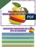 Función plástica y reguladora de los nutrientes