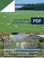 Agroecosistema y Ecosistema Natural