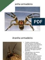 Aranha Armadeira