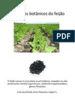 Aspectos botânicos do feijão