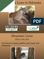 Mountain Lions in Nebraska PowerPoint