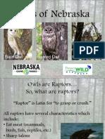 Owls of Nebraska PowerPoint