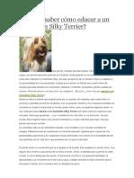 Quieres saber cómo educar a un Australian Silky Terrier