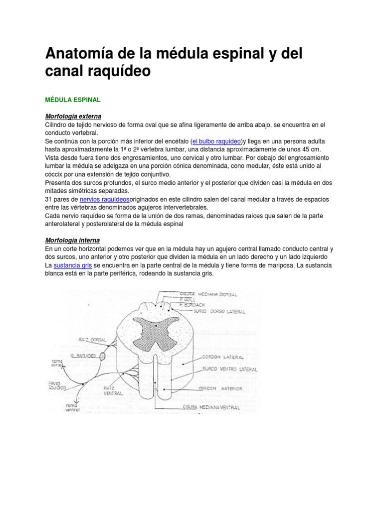 Anatomía de la médula espinal y del canal raquídeo